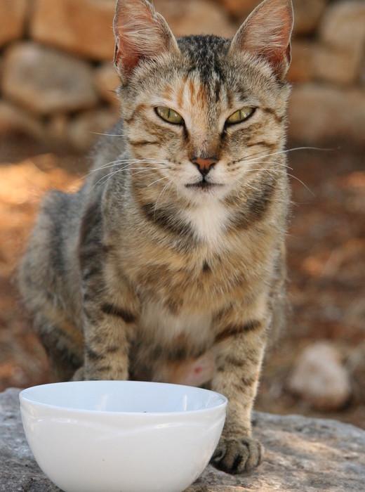wild-cat-1366186-640x960